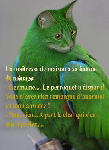 """Résultat de recherche d'images pour """"perroquet humoristique"""""""